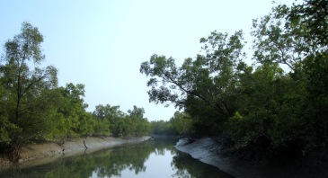 Sundarbans - Copy
