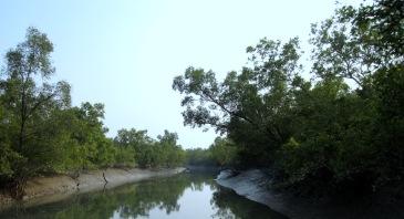 Sundarbans - Copy