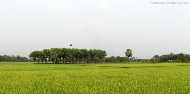 Beautiful Chougacha, Jessore - final