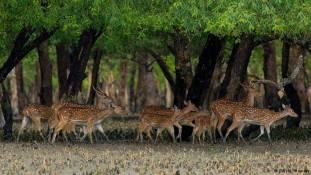 Sundarbans 02