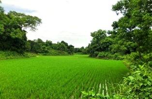Agro based Bangladesh - Copy