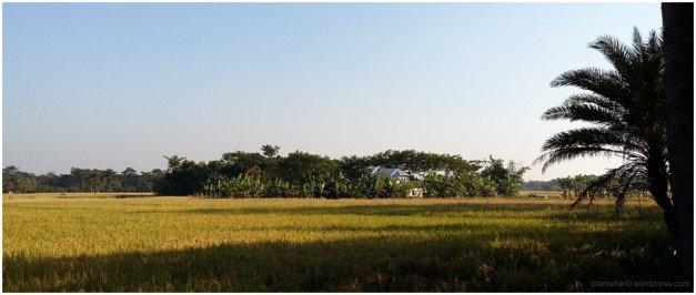 beautiful-south-bengal-01